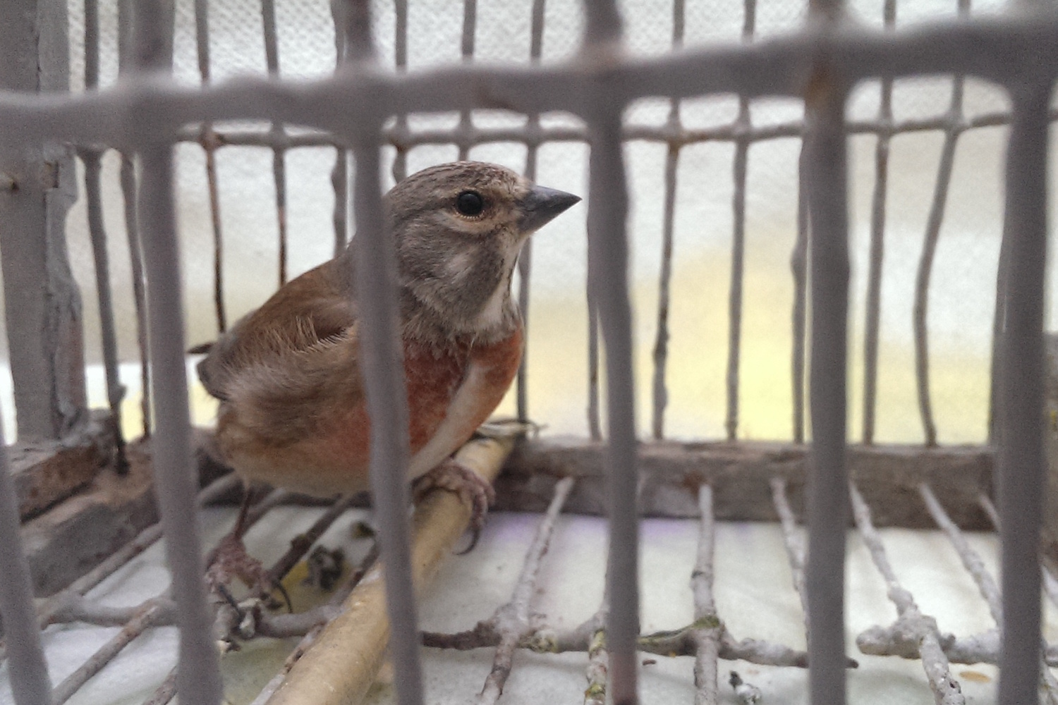 European court finds Malta guilty in bird-trapping case