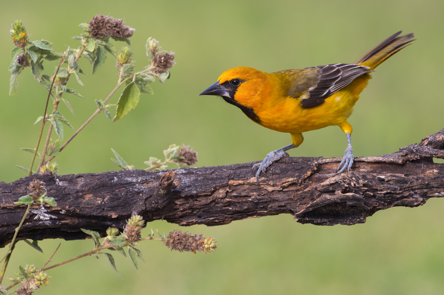 Border wall threatens birding sites; scientists speak out