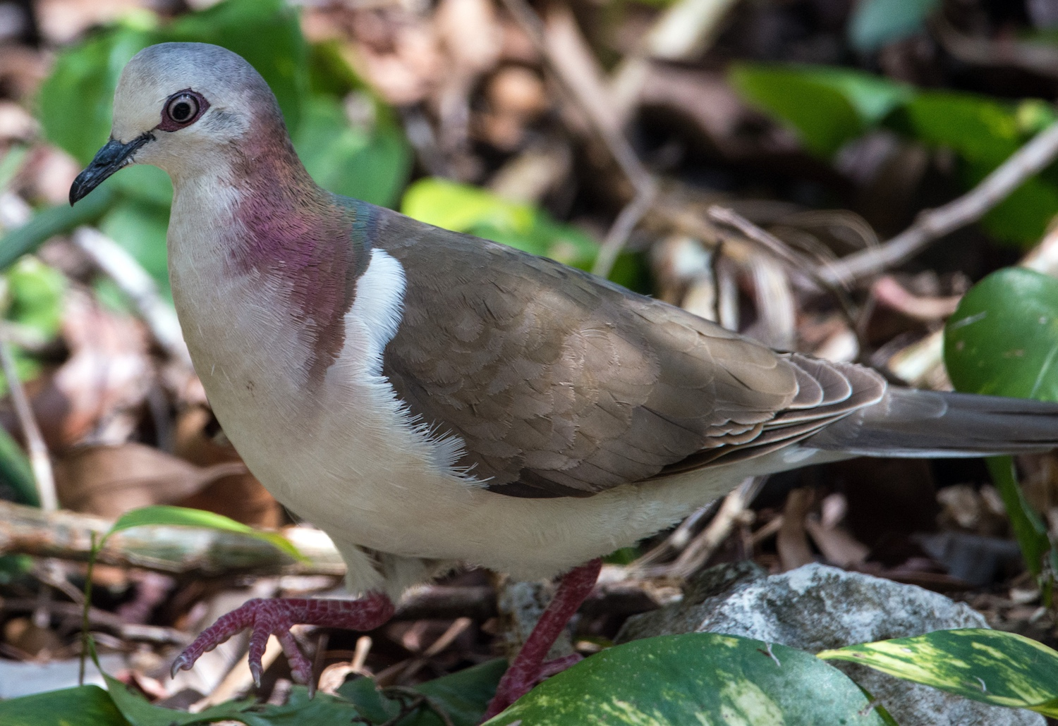 How two hurricanes in one year affected Cozumel's birds