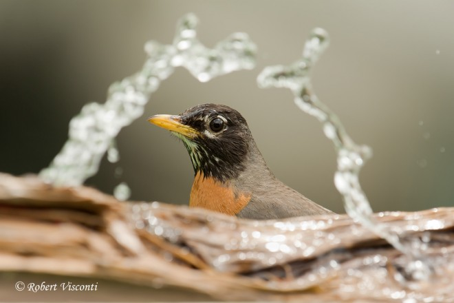 Three great bird bath accessories