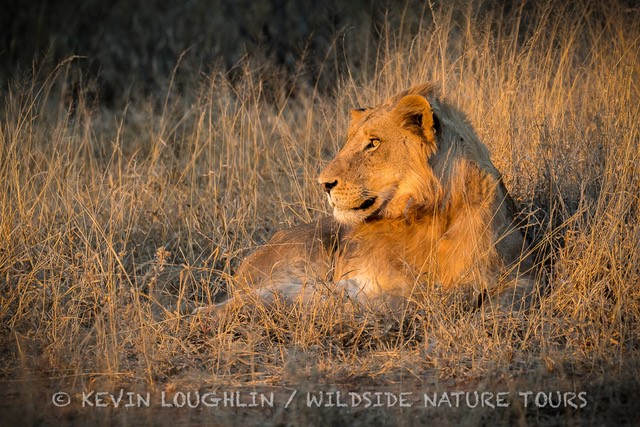 Wildside Nature Tours