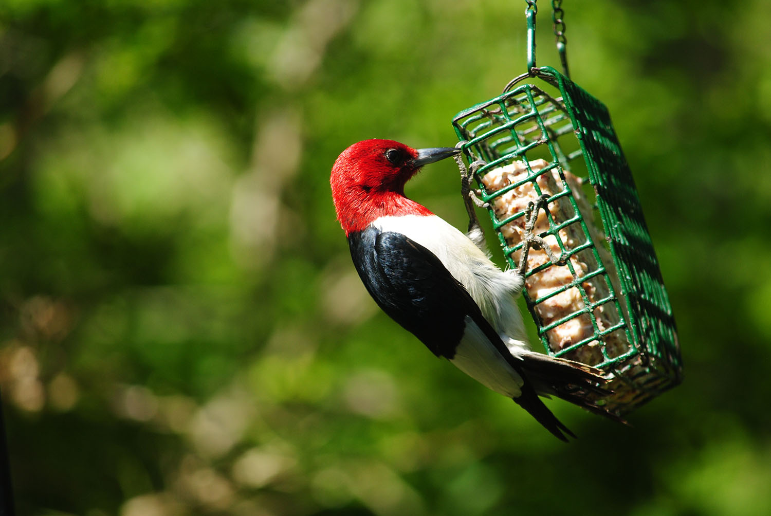 3 suet feeders to add to your yard