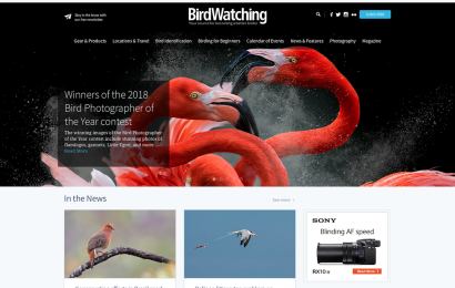 Welcome to the new and improved BirdWatchingDaily