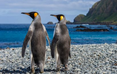 The penguin quest: A search for all 18 species