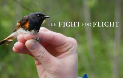Short film highlights migratory birds and their champions