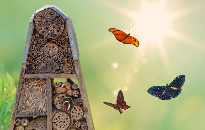 Four products to attract butterflies and other cool insects
