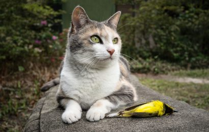 Biologists denounce 'science denialism' about outdoor cats