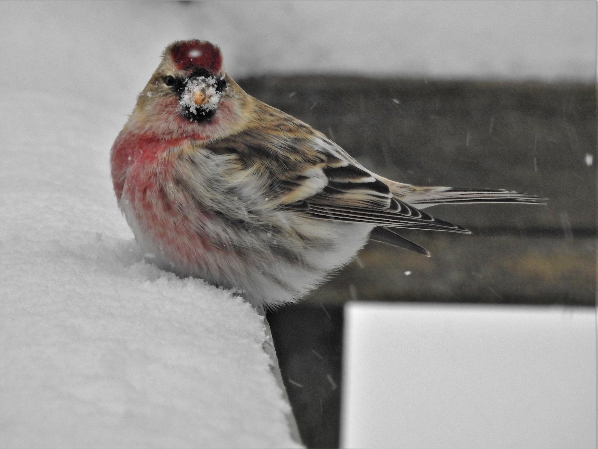 birds keep warm