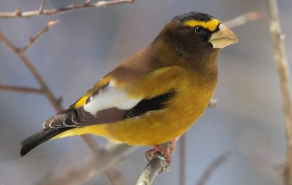 It's time for the Great Backyard Bird Count!