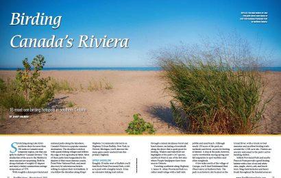 Birding Canada's Riviera