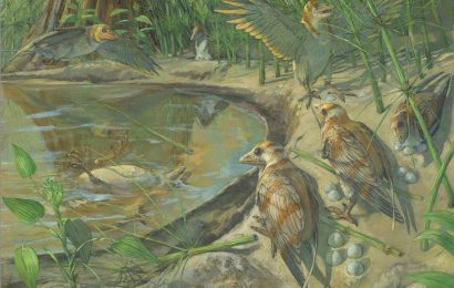 Fossil bird with egg inside discovered in China