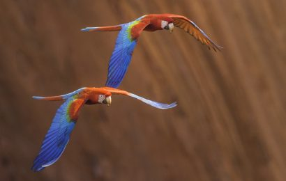 Frans Lanting on the art and sport of photographing birds