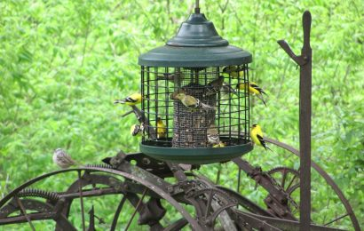 Four feeders to keep away larger birds and squirrels