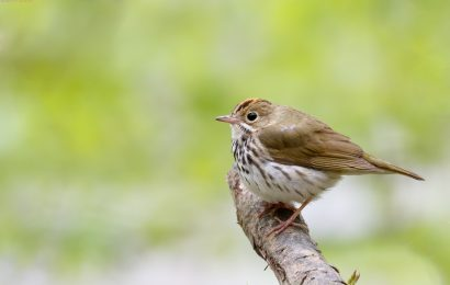Study: Fewer bird species find homes in a protected forest
