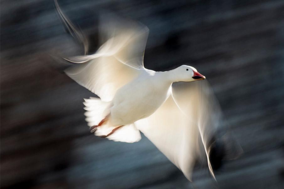 2019 BirdWatching Photography Awards - BirdWatching