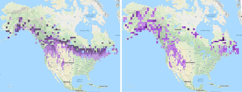 Pine Grosbeak maps