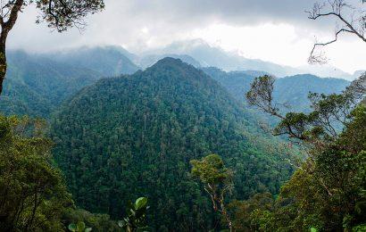 Honduras: A birder's view