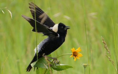 8 ways birders can help birds on Earth Day