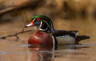 10 books about birders, conservation, Wood Ducks, and more