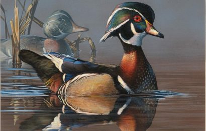 2019-2020 Federal and Junior Duck Stamps now on sale