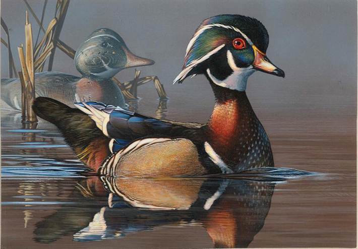 2019-2020 Federal and Junior Duck Stamps now on sale - BirdWatching
