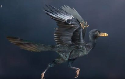 Exclusive video clip features birds' evolution from dinosaurs
