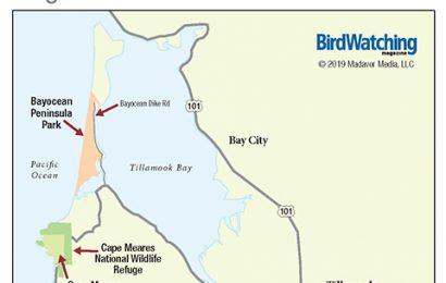 292. Bayocean Peninsula Park and Tillamook Bay, Tillamook County, Oregon