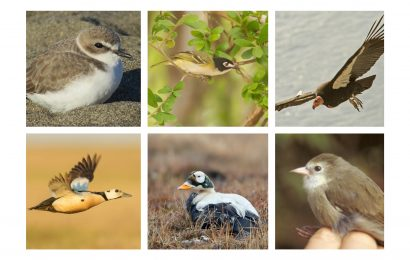 Feds honor heroes for endangered and threatened birds