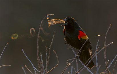 Audubon announces 2019 photo contest winners