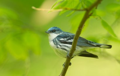 $20 million awarded to support bird conservation