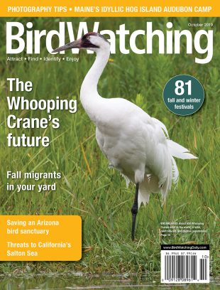 BirdWatching - Your source for becoming a better birder