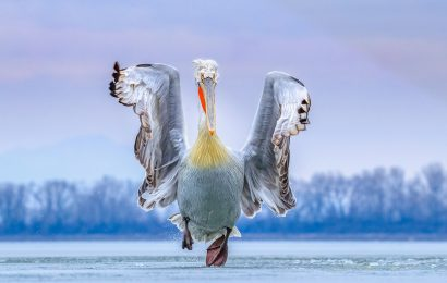 Bird Photographer of the Year winners announced