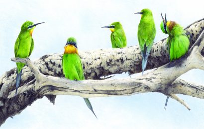 Acclaimed 'Birds in Art' exhibition to feature work by 114 artists