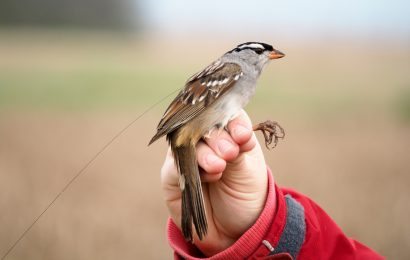 Study shows neonicotinoids threaten survival of wild birds