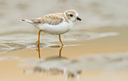 Take part in the 2019 Global Shorebird Count