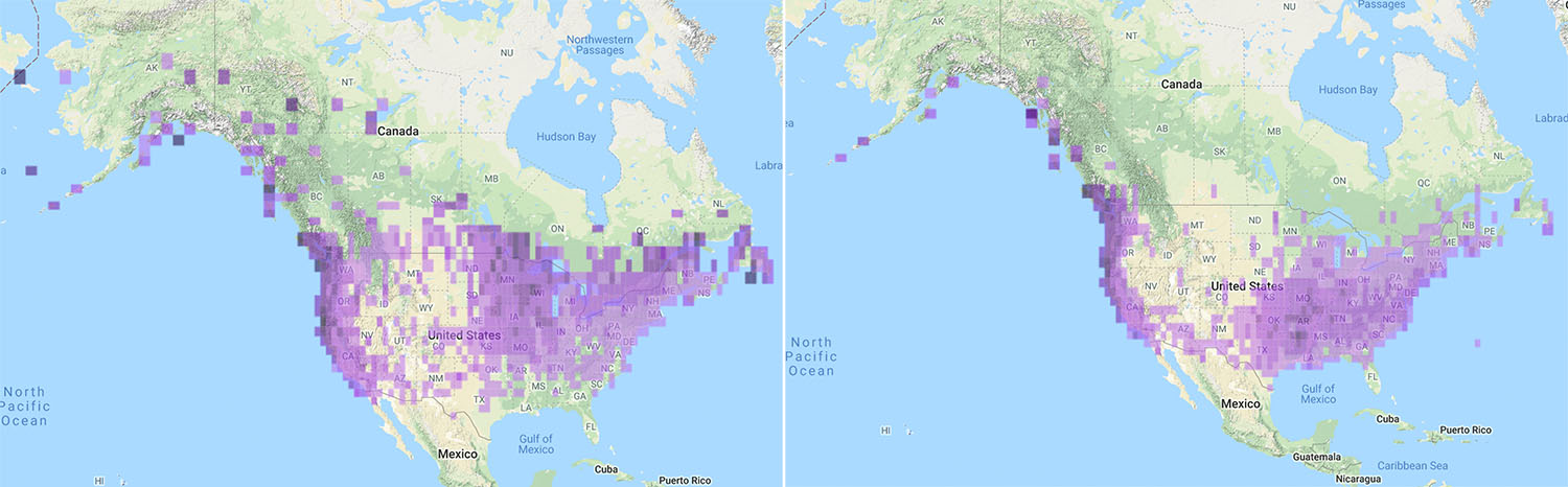 Fox Sparrow distribution maps