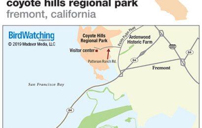 297. Coyote Hills Regional Park, Fremont, California