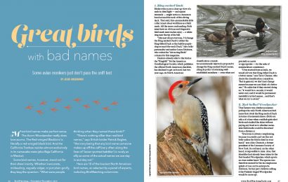 Great birds with bad names