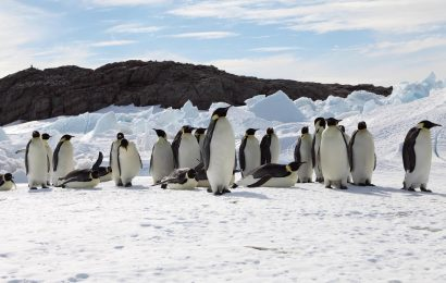 Emperor Penguins 'marching toward extinction'