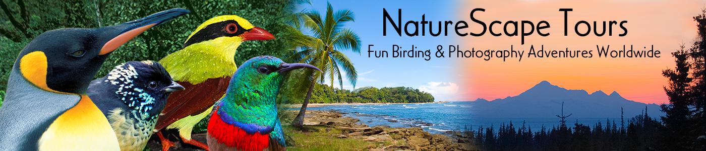 NatureScape Tours
