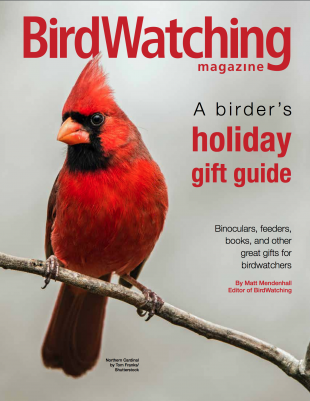 A Birder's Holiday Gift Guide