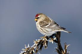 New England Bird Tours
