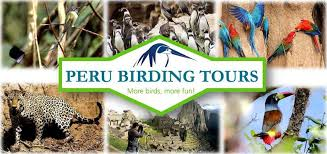 Peru Birding Tours