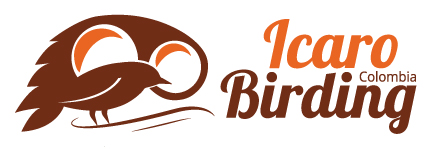 Icaro Birding