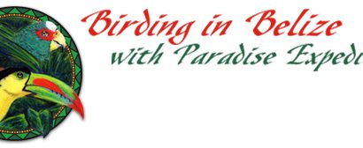 Paradise Expeditions