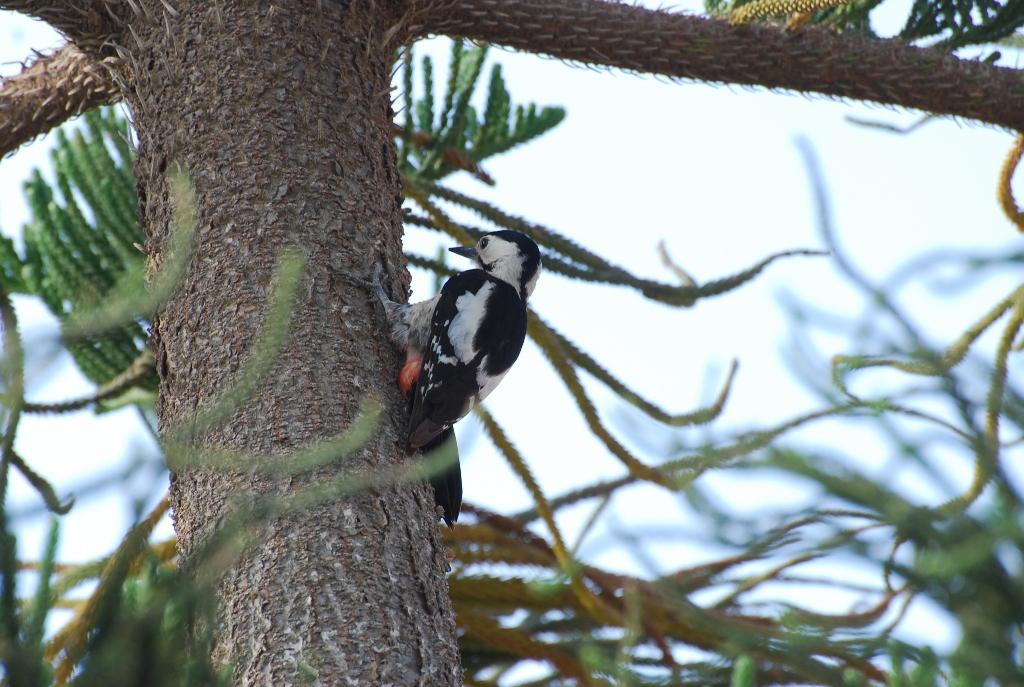 Carmel Birding Tours