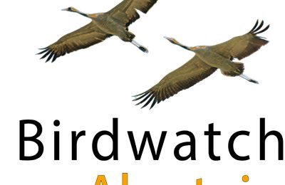 Birdwatch in Alentejo