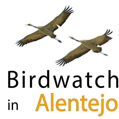 Birdwatch in Alentejo