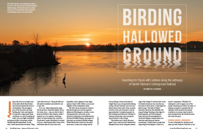 Birding hallowed ground