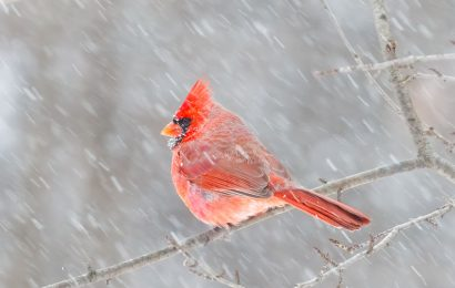 Don't let rain stop you from birding, Pete Dunne says